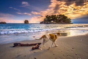 pies biegnący poplaży wkierunku zachodzącego słońca