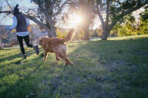 pies biegnący zawłaścicielem wparku